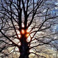 Sun meets tree