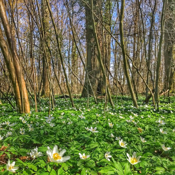 Spring in the Woods