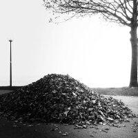 Loss of Leaves