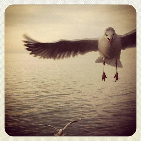 Meet Gulls I