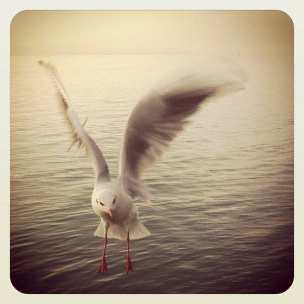Meet Gulls II