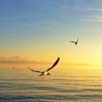 Gulls in the air