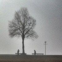 Meet in the Fog