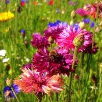 Bloomy summer II