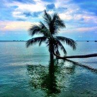 Palm Beauty