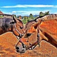 Horses, Brown Beauties