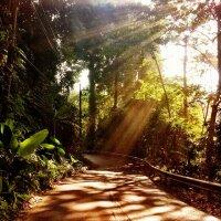 Sunbeams through the Green